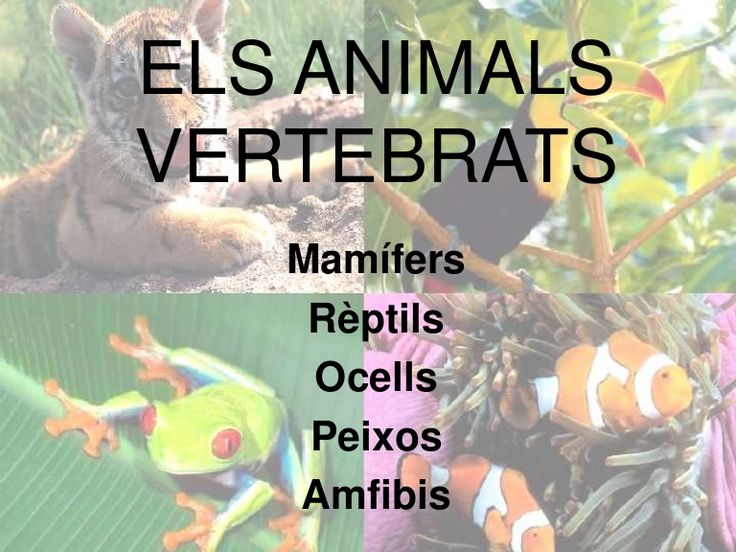 Els animals vertebrats by blogsbetaniacm via slideshare