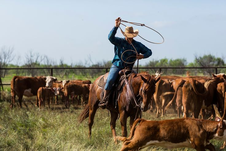 Time to rope 'em up & get it done. #ranchlife #cowboys | Photography by Jeremy Enlow