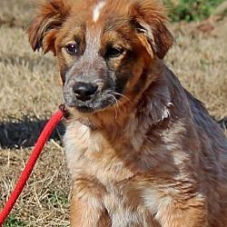 Yardley, Pennsylvania - Great Pyrenees. Meet Arlene B, a for adoption. https://www.adoptapet.com/pet/20812001-yardley-pennsylvania-great-pyrenees-mix