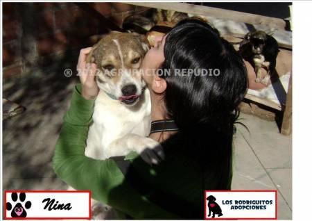 ¡Perritos en Adopción publicados en Vivavisos! http://adopcion-mascotas.vivavisos.com.ar/adoptar-dar-mascota+general-rodriguez/mestizo-de-labrador-en-adopcion-responsable-----------/39842886