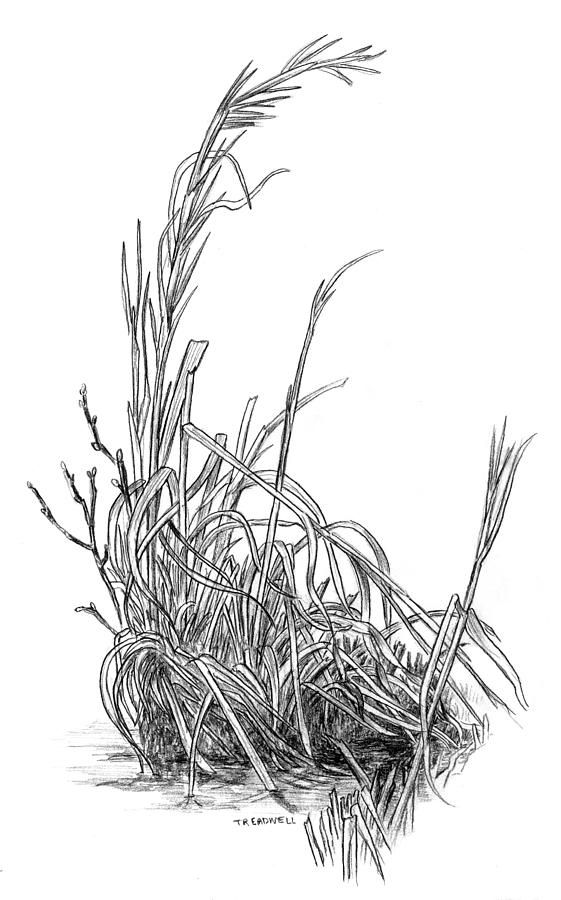 grass drawing black and white. winter grass drawing by tim treadwell black and white