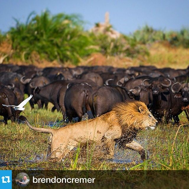 """Amazing photo at #DubaPlains by @brendoncremer ・・・