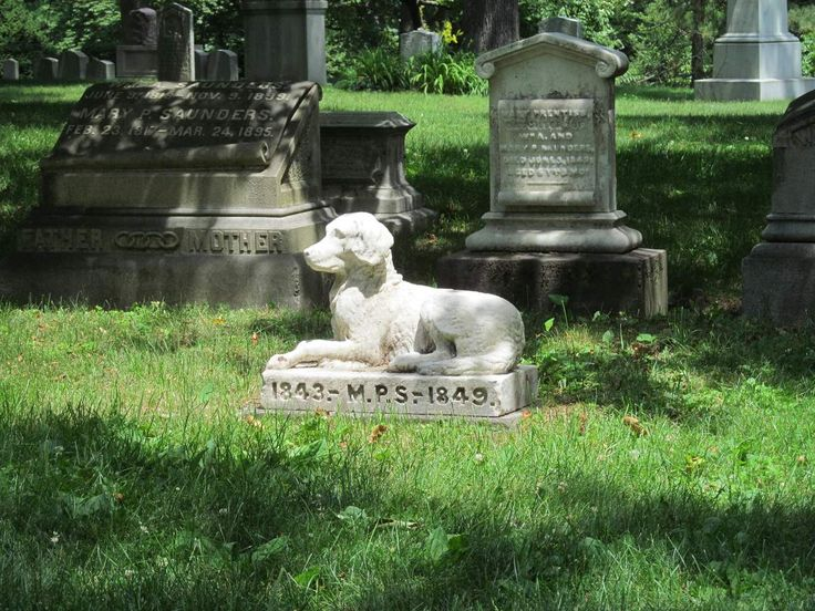 Be Humble Day Pet grief, Pet loss grief, Pets