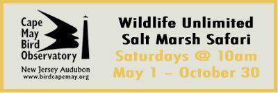 The Skimmer Salt Marsh Safari