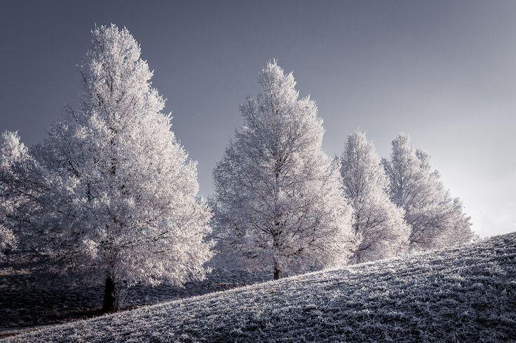 WWW2 - Winter White Wonderfill #2