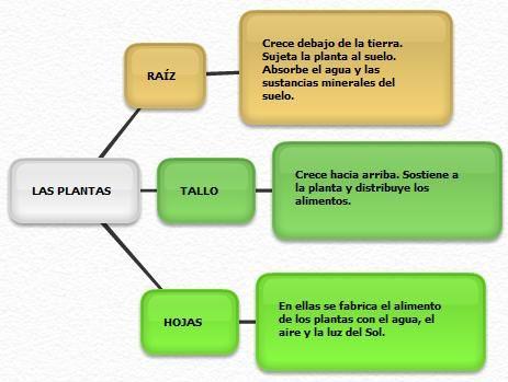 MOCHILA DE LOS SERES VIVOS - CBC/5º y 6º PRIMARIA: EJEMPLOS DE MAPAS/ESQUEMAS DE LAS PLANTAS