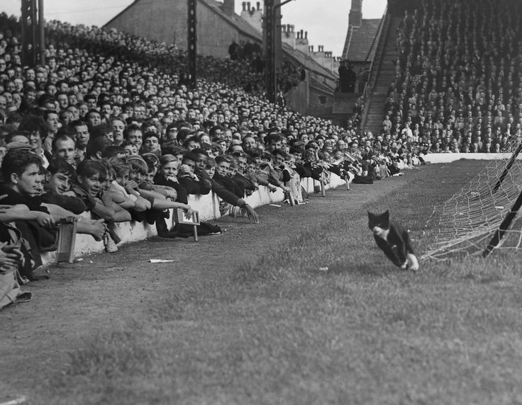 The Spion Kop 1964 - match of the day's first ever televised game and the infamous cat