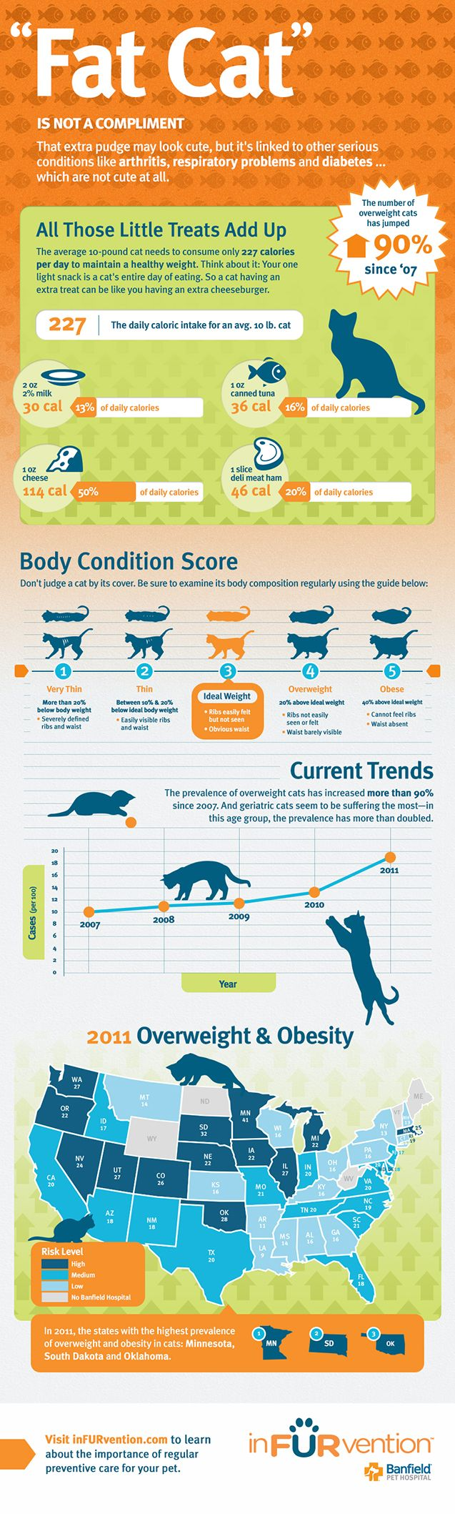Overweight Cats and Feline Obesity