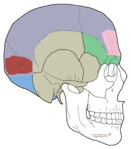 Understanding Trigger Points – Headache with Eye pain