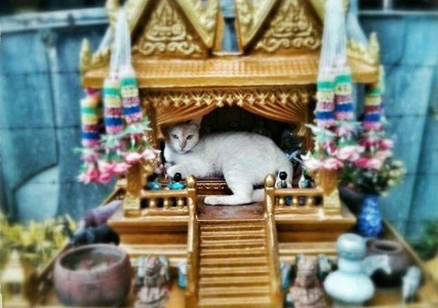 ไม ร จ กท ต ำท ส ง ชม 10 ภาพน องแมวส ดเก า ย ดศาลพระภ ม เป นบ านต วเอง Lovely Creatures Spiritual Animal Cats