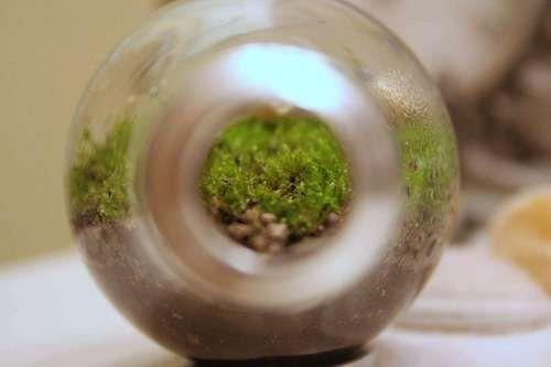 Comment faire un mini-terrarium dans une ampoule - Webzine Café Du Web