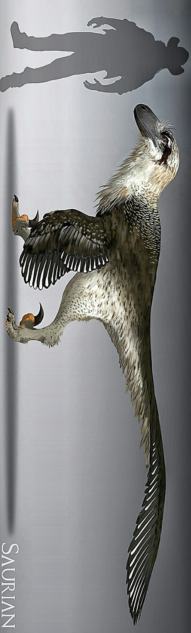 Acheroraptor is an extinct genus of dromaeosaurid theropod dinosaur known from the latest Maastrichtian Hell Creek Formation of Montana, United States. It contains a single species, Acheroraptor temertyorum. A. temertyorum is one of the two geologically youngest known species of dromaeosaurids, the other being Dakotaraptor, which is also known from Hell Cree