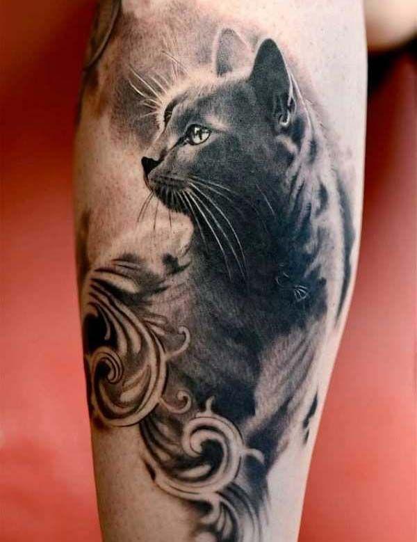 .  . Die Katze stammt von der nordafrikanischen Wildkatze ab und ist seit fast 10.000 Jahren eines der beliebtesten Haustiere. In nahezu jeder Kultur der Welt hat die Katze eine besondere Bedeutung. Im islamischen Volksglauben zum Beispiel, gilt die Katze als einziges Tier, das so rein ist, dass Was…