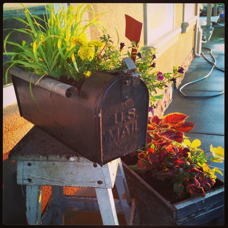 33 Best Images About Wood Planter Tree Box On Pinterest: 25+ Best Ideas About Mailbox Planter On Pinterest