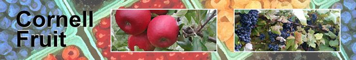 Cornell has this excellent resource for fruit/berry resource-fantastic place to look up plant diseases. -EK