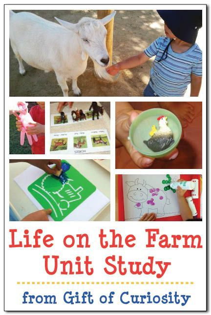 Life on the Farm unit study with lots of activities and links to free printables for teaching young children about farm life and farm animals    Gift of Curiosity