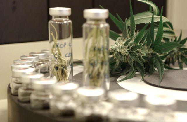 Neue Studie belegt, dass in Colorado der Cannabis-Konsum konstant geblieben ist. Ein häufiges Argument der Legalisierungs-Gegner ist sie Sorge, dass durch eine Freigabe von Cannabis der Konsum unte…