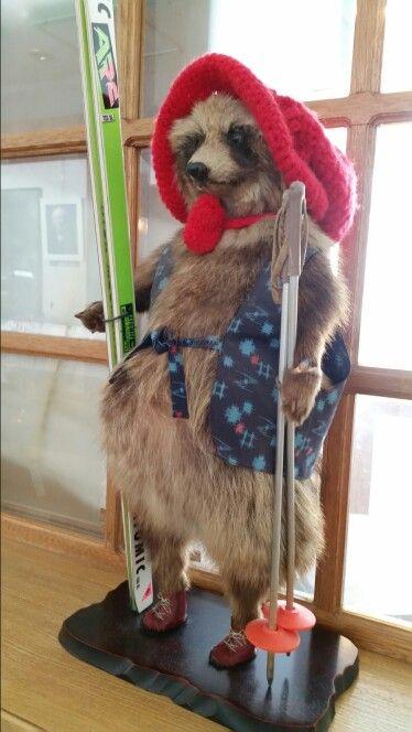 Skiing squirrel