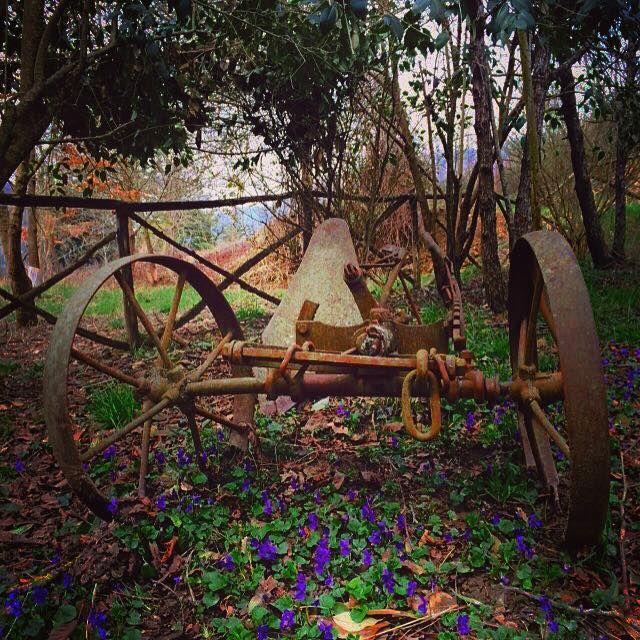 Violets Garden Cà Maranghi