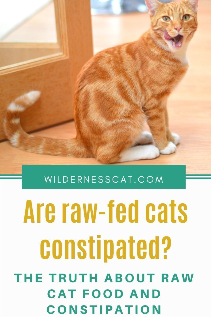 Pin On Radically Natural Cat Nutrition