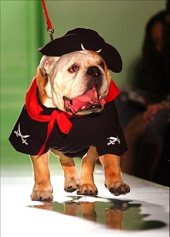 """A dog """"model"""" wears the latest fashion at a pet fashion show in London, Oct. 12, 2006."""