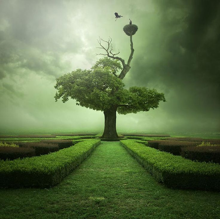 good photo manipulation: Mystic, Leszekbujnowski, Green Trees, Leszek Bujnowski, Photo Manipulation, Formal Gardens, Blog, Oak Trees, Heavens