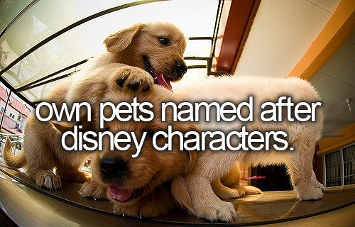I had a cat named Mufasa, 2 dogs named Nala and Kiara. A bird named Iago and ferrets named Abu, Aladdin, and Scar. Oh and a 3 fish named Bambi, Thumper, and well not disney but Scary Spice. :)