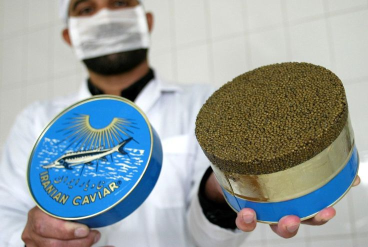 Eased Sanctions Could Mean a Comeback for Iranian Caviar.  Does this mean tough times for the endangered sturgeon?