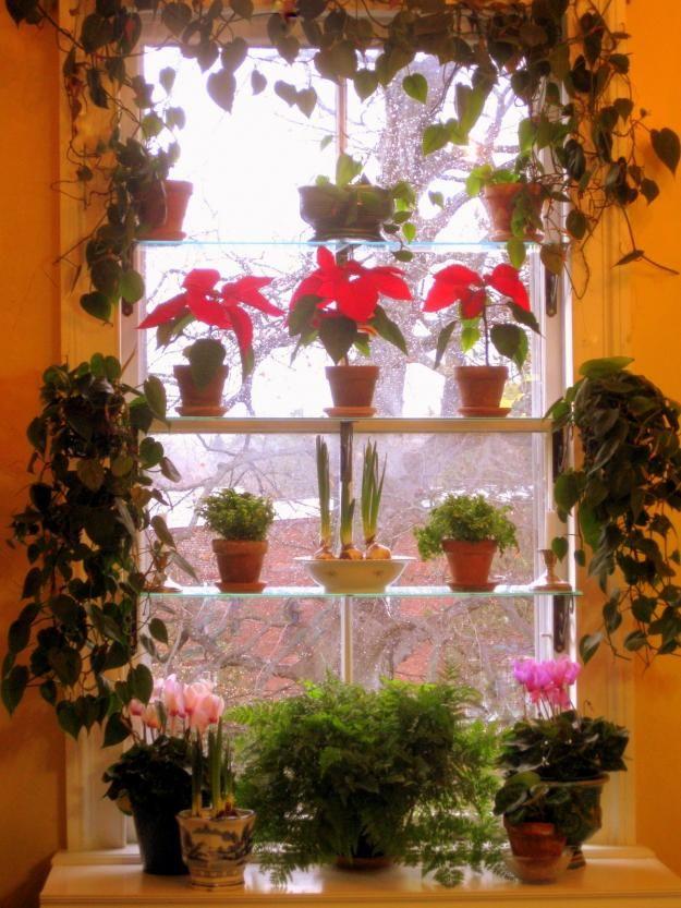 best 25 indoor window garden ideas on pinterest window herb gardens window plants and indoor window planter