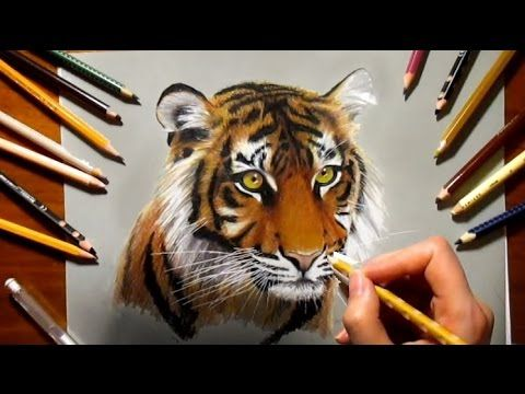 Speed Drawing: Tiger ♥   Jasmina Susak How to Draw a Tiger with colored pencils 虎 - YouTube