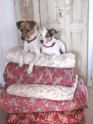 """When they were acting out """"The Princess & the Pea"""" Muffin didn't realize it wasn't supposed to be """"pee""""."""