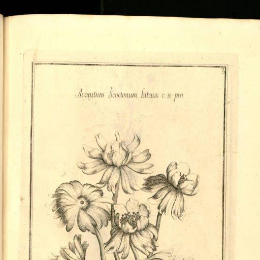 Histoire des plantes qui naissent aux environs d'Aix, et dans plusieurs autres endroits de la Provence :: Histoire naturelle