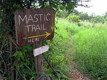 Mastic Trail, Grand Cayman (5193361753).jpg