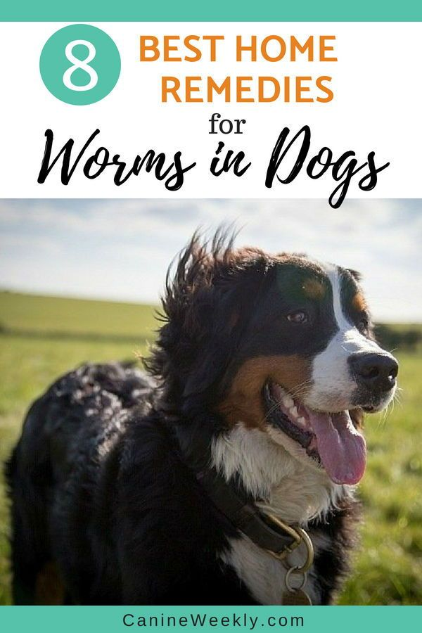 8 Home Remedies For Deworming Dogs Natural Health Remedies For