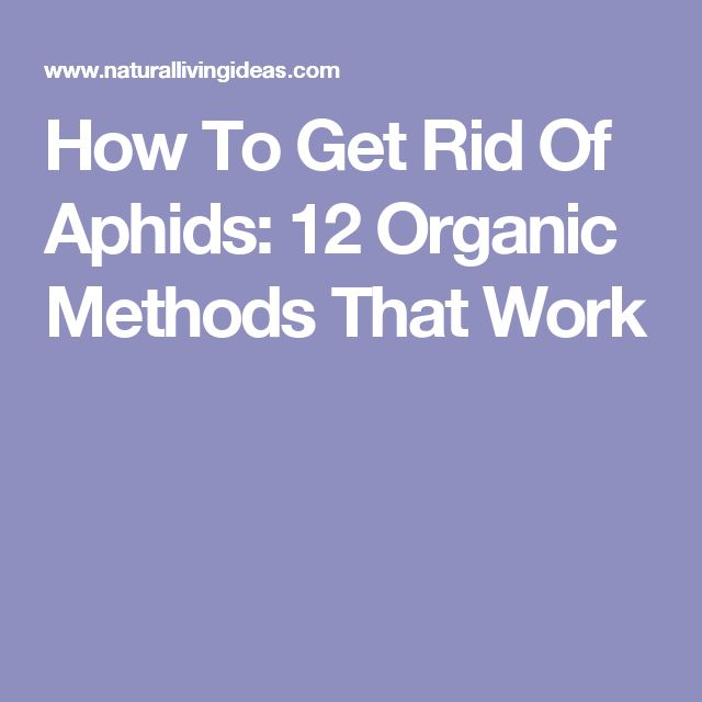 aphids how to get rid of them naturally