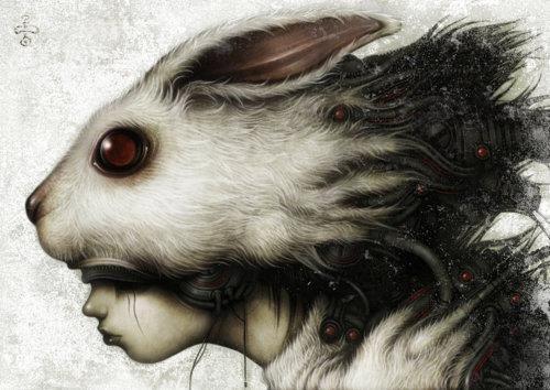 illustrazione testa di coniglio