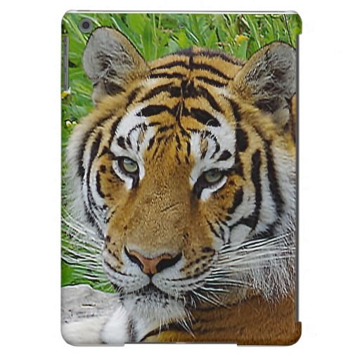 Ipad cover photo of a Siberian tiger
