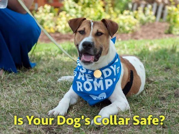 PETA, la più grande organizzazione mondiale per i diritti degli animali, lancia l'allarme: attenzione al collare perché potrebbe essere pericoloso per il tuo cane!