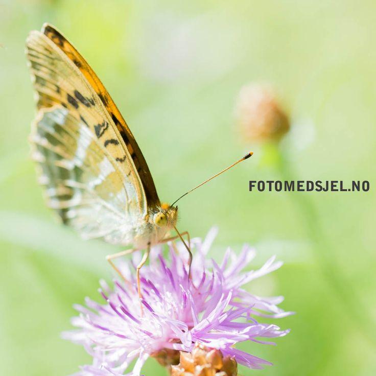 Butterfly, Moss, Norway.