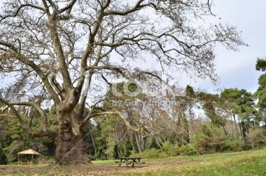 plato forest kiosk bench Royalty Free Stock Photo