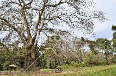 plato forest kiosk bench Royalty Free Stock Photo