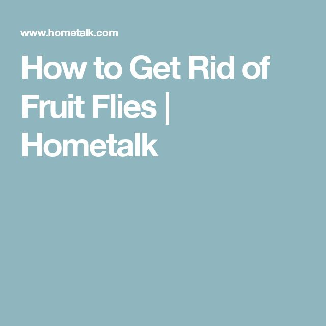 17 best ideas about fruit flies on pinterest ants in house get rid of ants and pest control. Black Bedroom Furniture Sets. Home Design Ideas