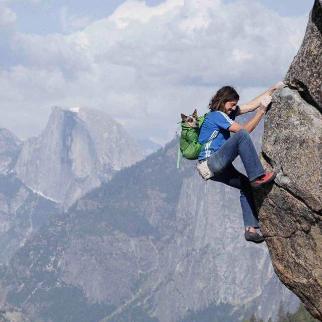 Dean Potter, and his dog, Whisper, climbing in Yosemite. Photo courtesy of Dean Potter.