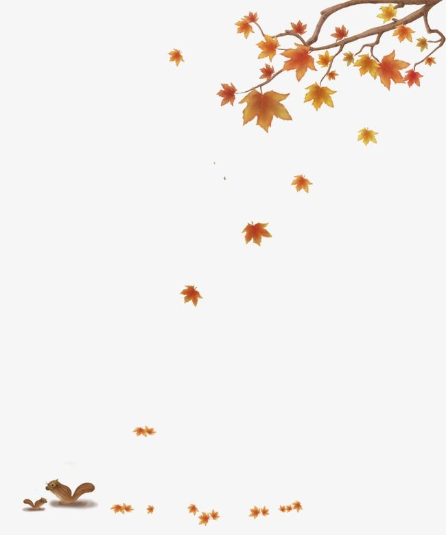 Autumn Leaves Maple Leaf Defoliation Fall Png Transparent Clipart Image And Psd File For Free Download Autumn Leaves Autumn Leaves