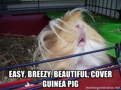 The cute new model of easy breezy beautiful cover guinea pig is awesome!
