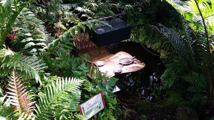 Freizeit-Tipp - Botanischer Garten Kiel ~ Sarah hats getestet
