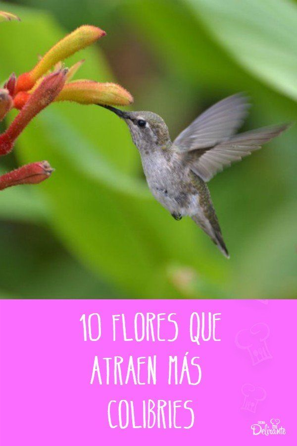 10 flores que atraen más colibríes a tu jardín Ideas Originales, Gardening, Natural, Gardens, Sage Green House, Fence Garden, Planters, Landscaping, Plants