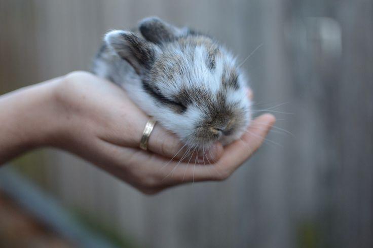 Little bunny sleeping in hand. Photo taken on Nikon D3200.