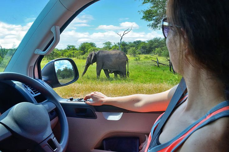 Self driving in Kruger National Park, South Africa | How to get the most out of #Kruger National Park, #SouthAfrica | Weather2Travel.com #travel #africa #safari #adventure #roadtrip