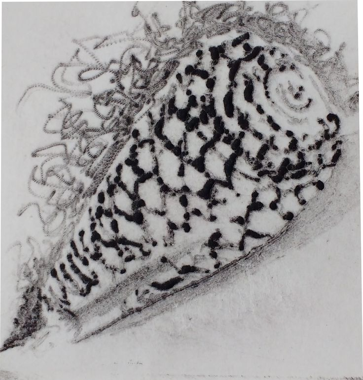 Etching on polycarbonate plate - Shellfish I By Márcia Santtos 2016 image size: 4,5 x 4,5 cm